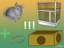b_250_250_16777215_00_images_670px-Breed-Chinchillas-Step-1.jpg