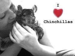 b_250_250_16777215_00_images_I_love_chinchillas.jpg