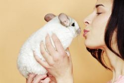 b_250_250_16777215_00_images_chinchilla-with-owner.jpg